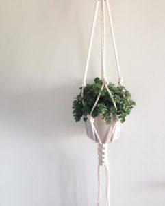 suspension-plante-chino-1
