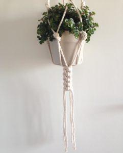suspension-plante-chino-2