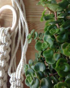 suspension-plante-chino-4